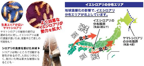 増え続ける0円住宅